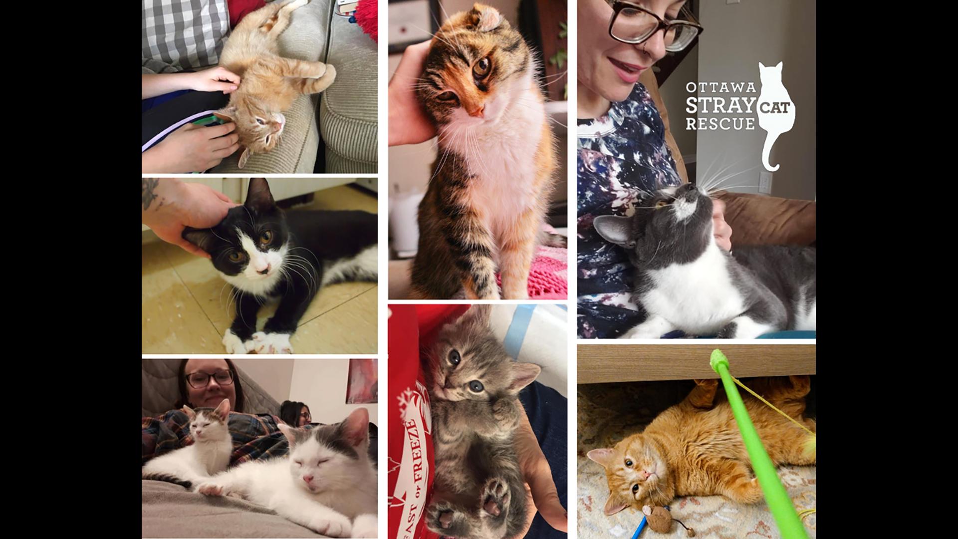 partnership with Ottawa Stray Cat Rescue