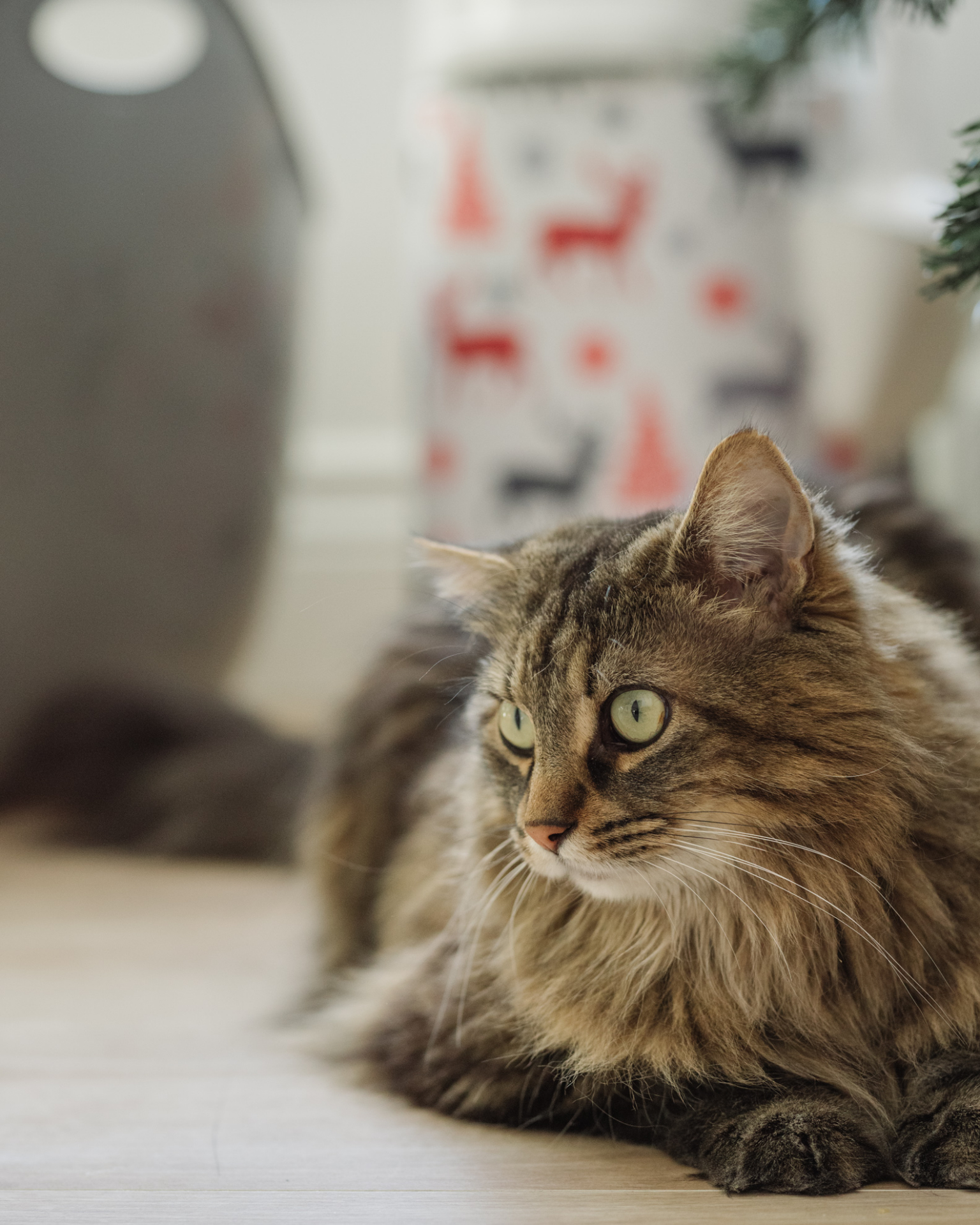 LitterLocker Housse de Noel 2019