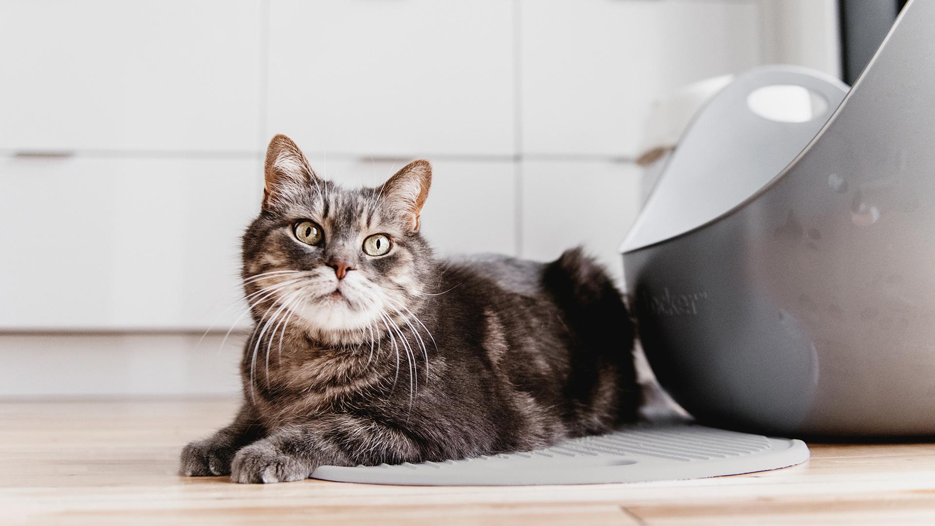 Cat Litter Mat by LitterLocker_Lifestyle