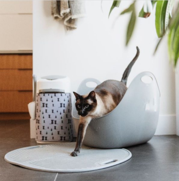 How to Get Rid of Cat Litter Smell?
