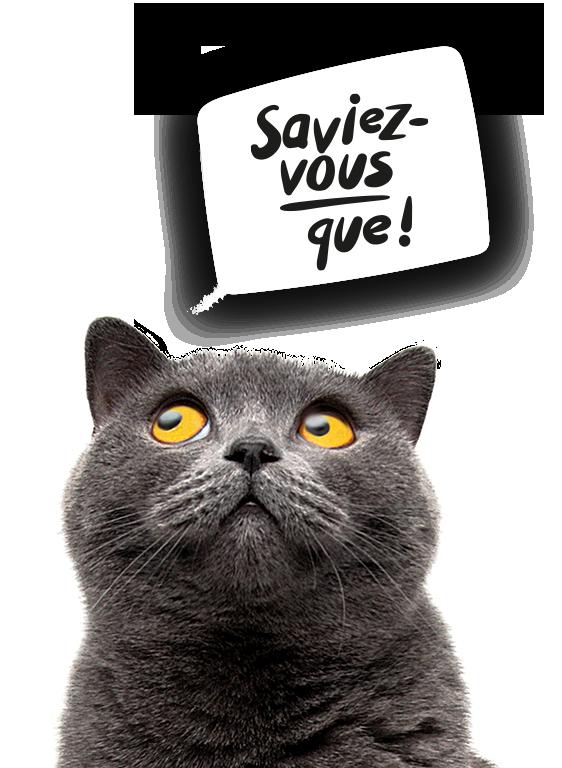 Bac à litière pour chat LitterLocker Saviez-vous que