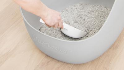 Le bac de litière et son nettoyage : la source de bien des soucis