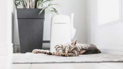 LitterLocker lifestyle images