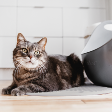ecofriendly cat litter